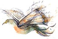 Book Dove